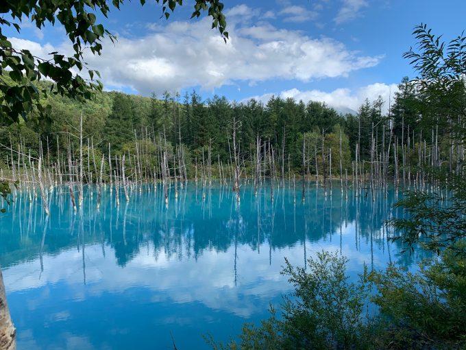 神秘的な美瑛の「青い池」