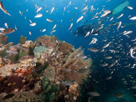 タイの中でも有数のダイビングスポット・タオ島
